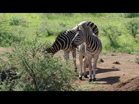 Pilanesberg – South Africa
