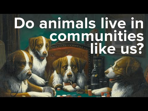 Do Animals Live in Communities Like Humans? Scientific Miracles of the Quran Ep. 9
