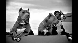 Snoop Lion - Harder Times (Feat. Jahdan Blakkamoore)