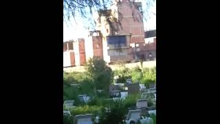 أغاني الراي و السطايفي في مقبرة العالية