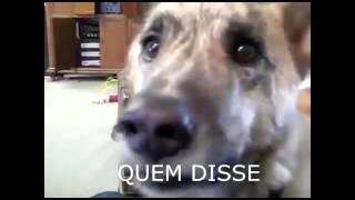 O cachorro falante 2