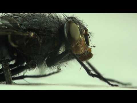 Lumnia: LED Fly Killer Range   Rentokil