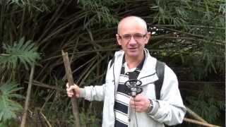 Isaias e o Bambu