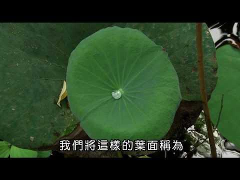 國小_自然_蓮葉效應【翰林出版_四上_第二單元 水生生物的世界】 - YouTube