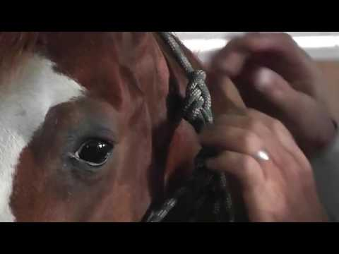 How To Fit and Tie a Silvertip Halter