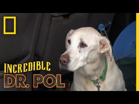 A Runaway Dog Gets a Checkup | The Incredible Dr. Pol