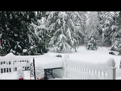 Snowmageddon Pacific Northwest PNW Seattle Snowpocalypse!