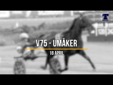 V75 tips Umåker