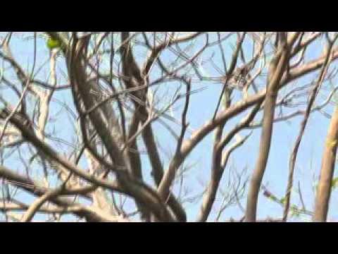 Nicaragua Ometepe Eekhoorn 3 xvid