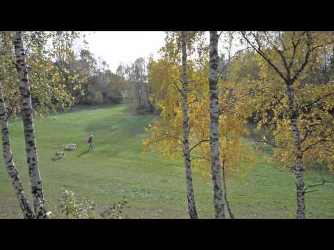 Kojakparken Det gröna Helsingborg