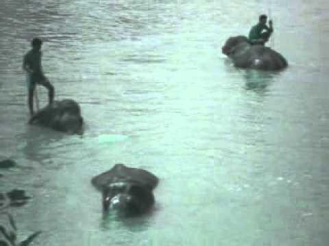 Chitwan Jungle Safari Tour – Elephant Bathing