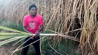 Ndanga power nzimbe