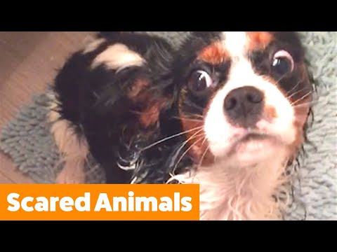 Cutest Pets Getting Scared | Funny Pet Videos
