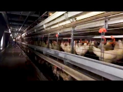 """39 Arrested Protesting Industrial Farm Supplying So-Called """"Cage-Free"""" Eggs to Amazon & Whole Foods"""