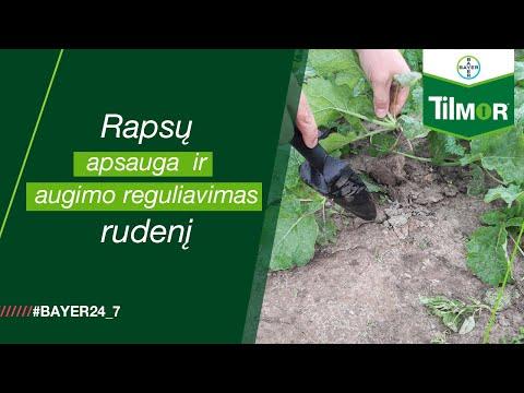Žieminių rapsų apsauga ir augimo reguliavimas rudenį