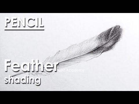 Pencil Drawing : How to Draw A Feather