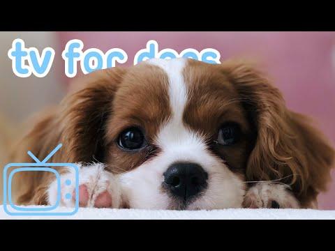 CÃO TV! Entretenimento divertido para o seu cão durante a quarentena! NOVO 2020!