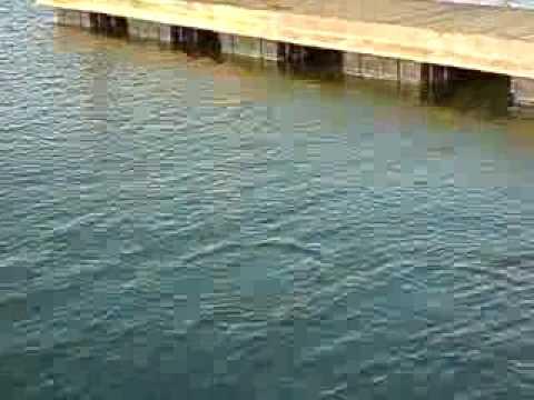 El Muelle, Marina Puesta del Sol.MP4