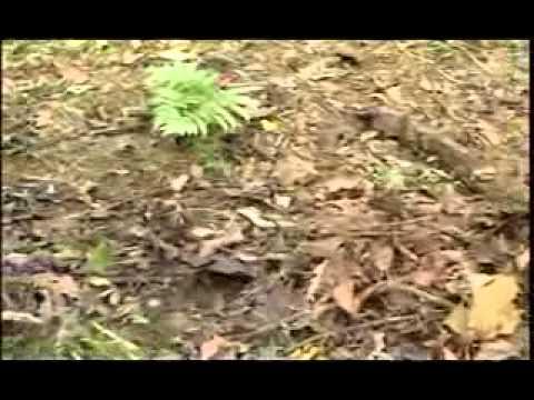 第1077集 六足小精靈 奇妙的昆蟲世界(上) - YouTube