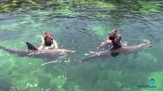 Мексико - Моята незабравима среща с Делфините!