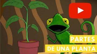 Camaleón y las naturales ciencias T2   Partes de una planta   Capítulo 13