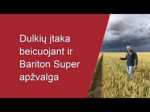 Dulkių įtaka beicuojant ir Bariton Super beico apžvalga