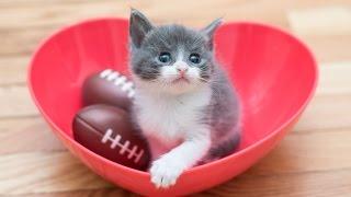 Meet Small Fry, The Tiniest Kitten