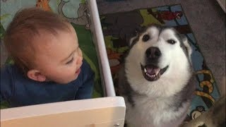 When my Baby is Crying I bring in the Huskies!