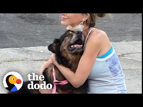 16-Year-Old Dog Finally Finds His Family    The Dodo Faith = Restored
