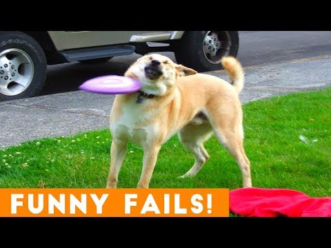 Try Not To Laugh At Funny Pet Fails  Funny Pet Videos
