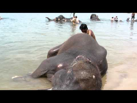 MOVIE Elephant bathing