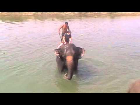 Sarah elephant bathing in Nepal 2010