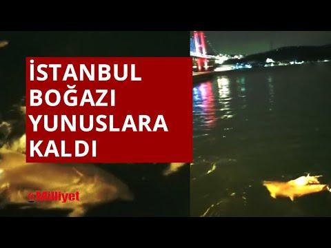 İstanbul Boğazı yunuslara kaldı!