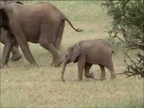Passage d'un Troupeau d'Elephants au Parc Kruger en Afrique du Sud