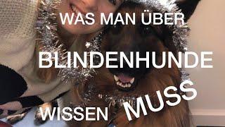 WAS MAN ÜBER BLINDENFÜHRHUNDE WISSEN MUSS | by YPSILON