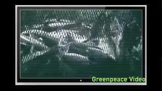 Greenpeace's FAD Deception - English