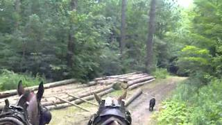 Horse Logging at Earthwise Farm & Forest   Part 3