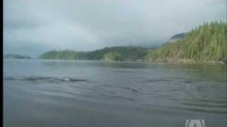 Orca's Killer Instincts Caught on Tape