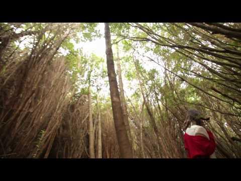 Lengua de Sergio Lagos Letra y Video