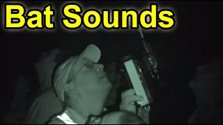 What Do Bats Sound Like?  Listen & Hear It...With A Special Bat Detector!