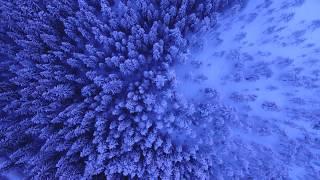 XXXTentacion - Jocelyn Flores (Downtime Remix) (Clean)