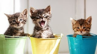Cute Kittens - Try Not to Say Aww Challlenge 2016