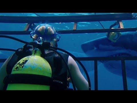 A 47 metros - Trailer subtitulado en español (HD)