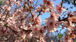 Tavaszi szél vizet áraszt - Spring wind floods water (Hungarian folk song from)