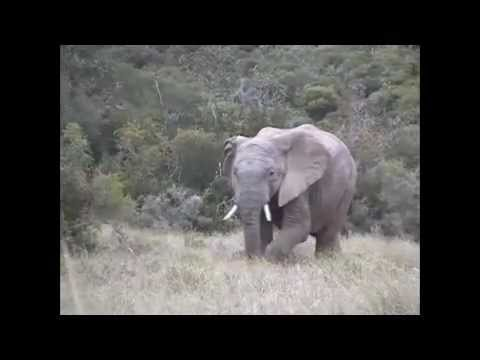 Wonderful Elephant Spotting at Addo Elephant Park Safari.wmv