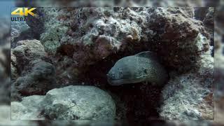 Красивая релакс музыка Yakuro для сна!!!!! Под потрясающее видео подводной съемки 4к
