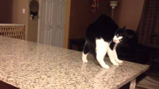 Smooth Criminal Cat Vine - Remastered
