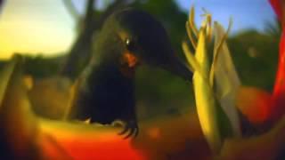 Yakuro - Hymn Of Life