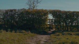 Bibio - Wren Tails