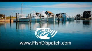 Fish Dispatch   Big Day Official Video